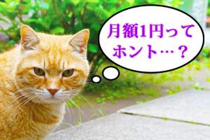 価格コムNURO光1円